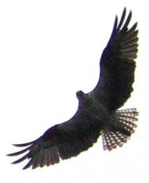 osprey-2010